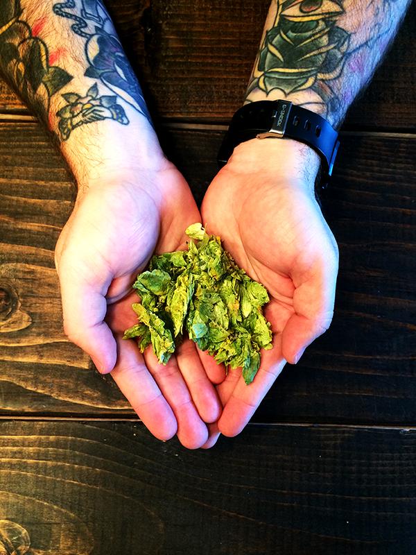 Our fresh Magnum hops.